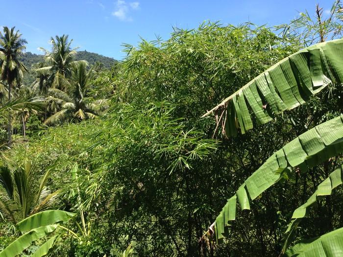 Вид из окна на джунгли и горы
